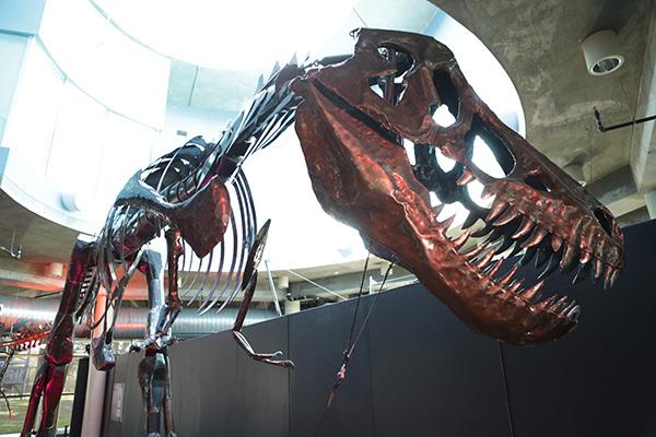 mosi-tampa-dinosaur-exhibit
